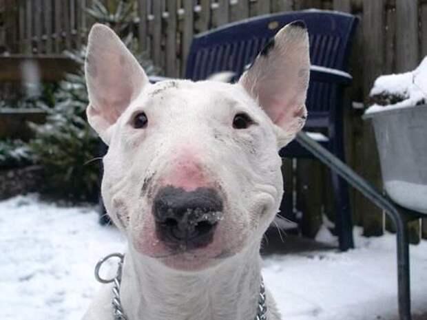 Ели смолу и жарили мышей: пенсионер со своей собакой заблудился и три недели жил в тайге