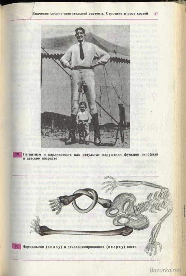 Пошлые Рисунки в Учебниках