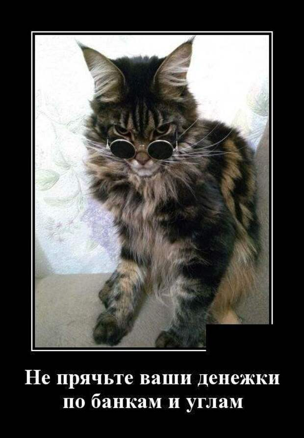Образ кошки в демотиваторах демотиваторы, коты, юмор