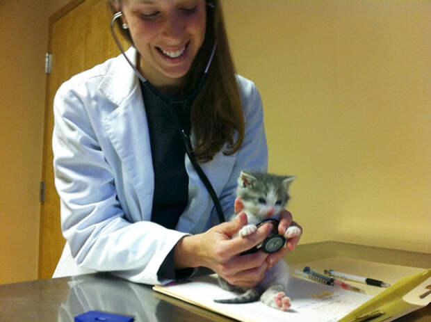 Первый визит к врачу ветеринары, животные