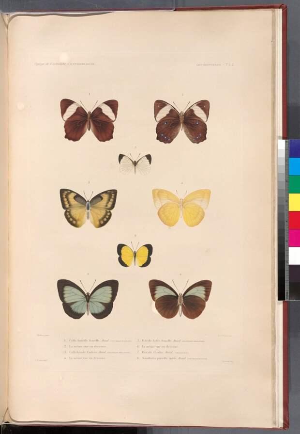 Нью-Йоркская библиотека выложила в открытый доступ более 180 000 изображений