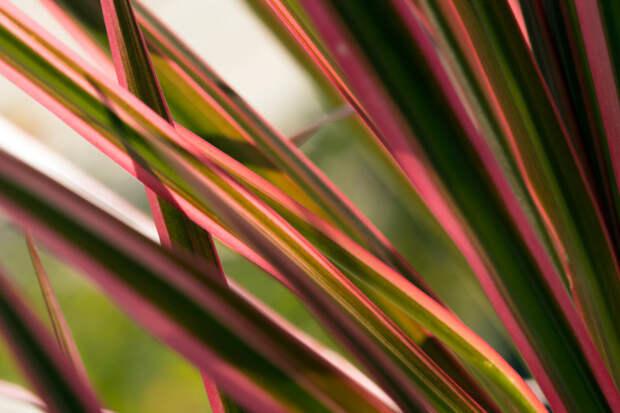 8 растений, которые помогут тебе выспаться