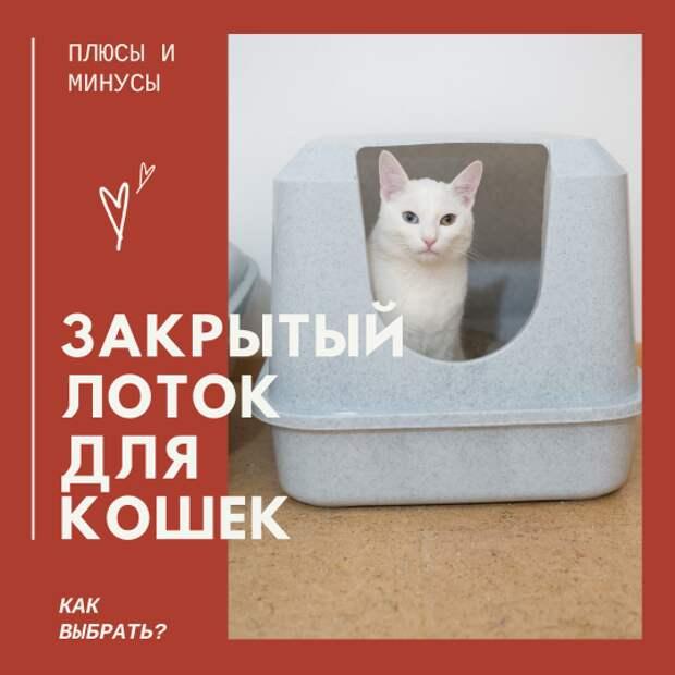 Закрытый лоток для кошек. Плюсы, минусы. Как выбрать?