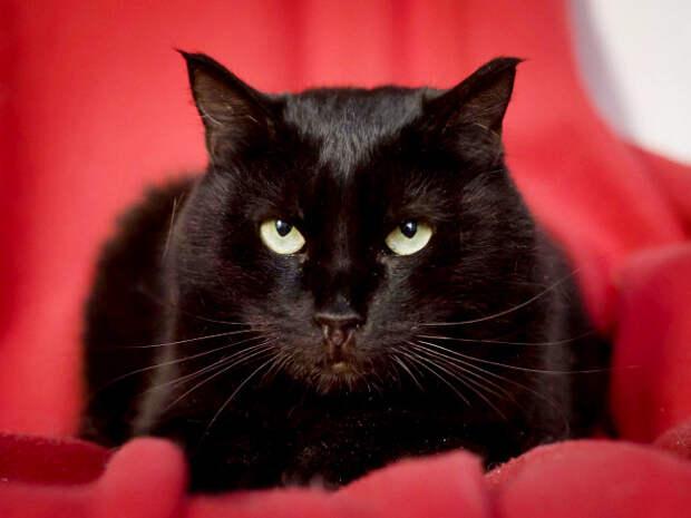 Пятничный котик Ночка цвета суперблэк