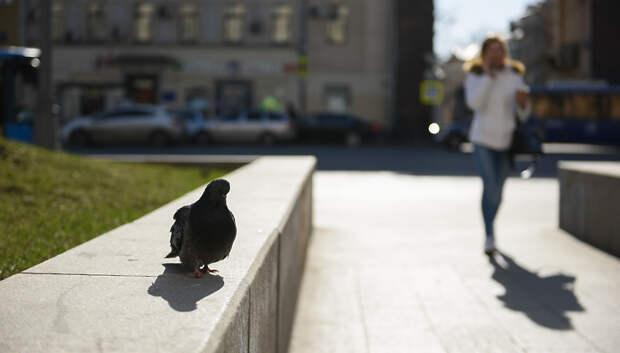 Погода без осадков и до плюс 17 градусов ожидается в Подольске в четверг