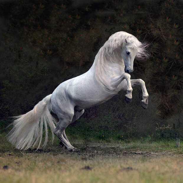 Восхищение лошадьми в работах польского фотографа