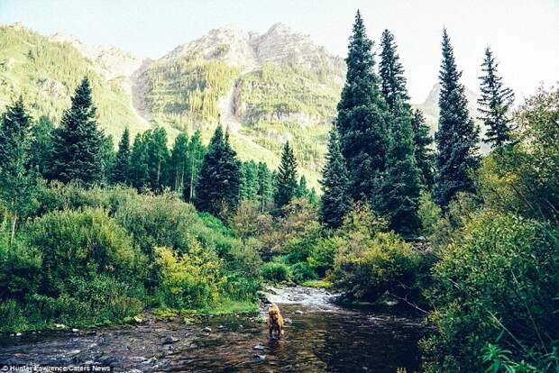 Аспен-путешественник, или приключения золотого ретривера