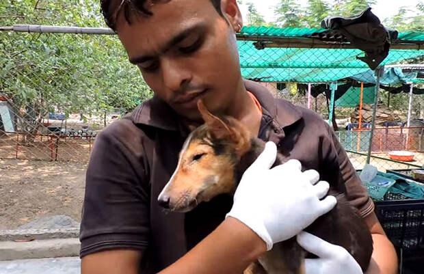 Чудесное спасение щенка, который умирал на улице