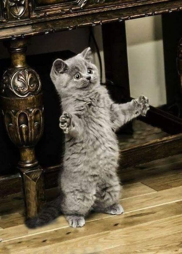 10 веселых фотографий удивленных кошек