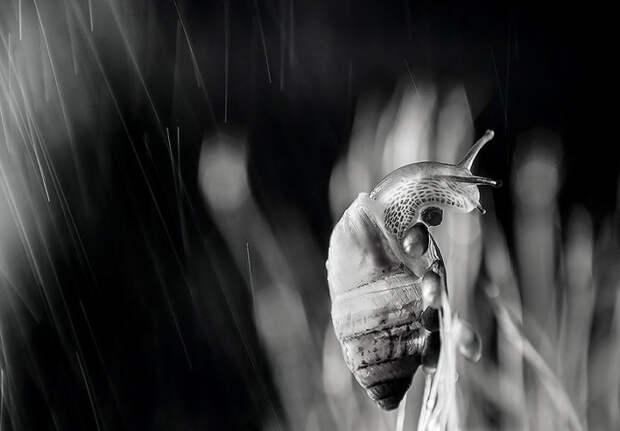 Невероятные макро-фотографии Ивелины Благоевой