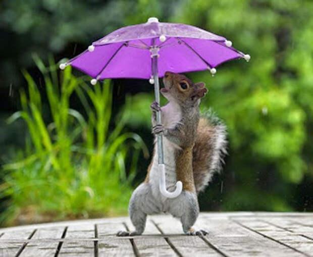 Фотограф дал белке крошечный зонтик, чтобы та укрылась от дождя