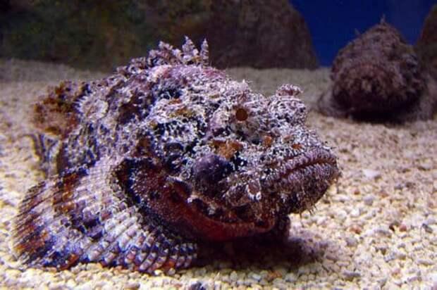 Топ-5 самых ядовитых и смертельно опасных рыб в мире