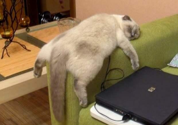 Как правильно играть с котами