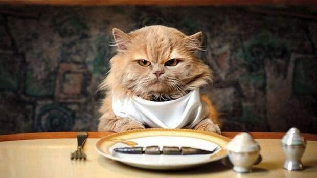 Кормление вашей кошки. Делайте это правильно!