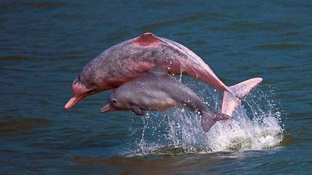 Почему акулы боятся дельфинов? Потому что они умеют жертвовать собой...