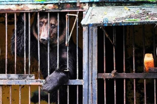 Животные, спасённые  с затопленного уссурийского зоопарка