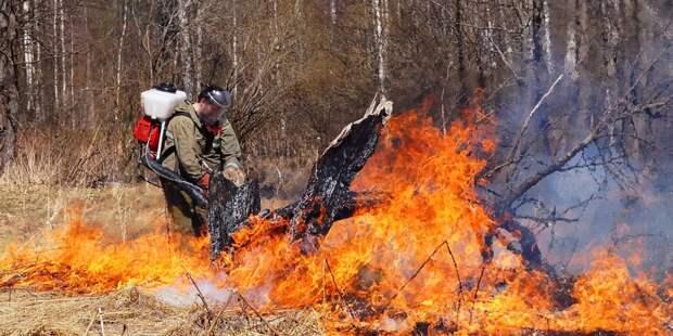 Леса России начали пылать