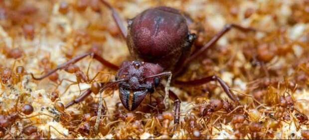 Чему может научить нас старение муравьёв, пчёл и других социальных насекомых? 3