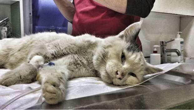 «Всё равно люблю!» Кот-приманка, которого подростки бросили на стройке, улыбается людям!