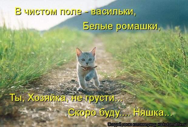 Котоматрица: В чистом поле - васильки, Белые ромашки, Ты, Хозяйка, не грусти... Скоро буду.... Няшка...