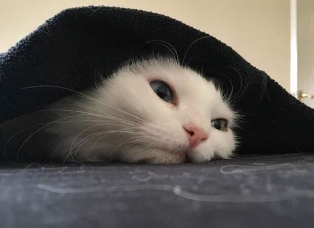 Снимки котеек, после которых вам захочется подремать