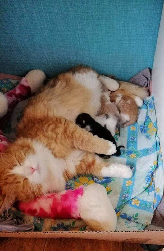 Счастливая кошкомама
