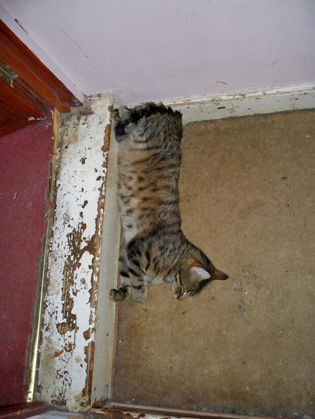 32.  кот, поза