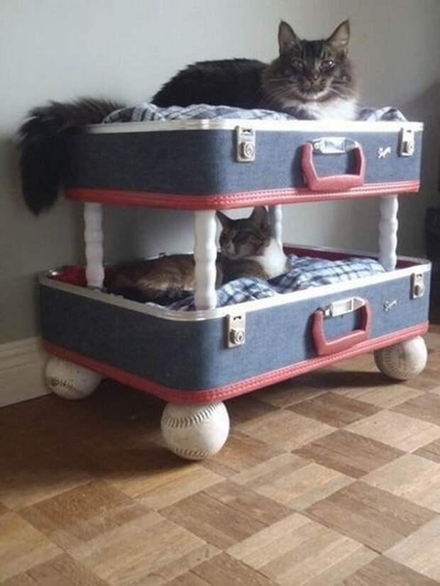 cathouse30 Дизайн для котов