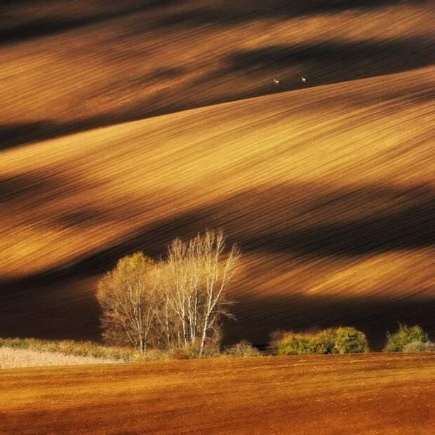 12 невероятных фотографий без грамма Фотошопа