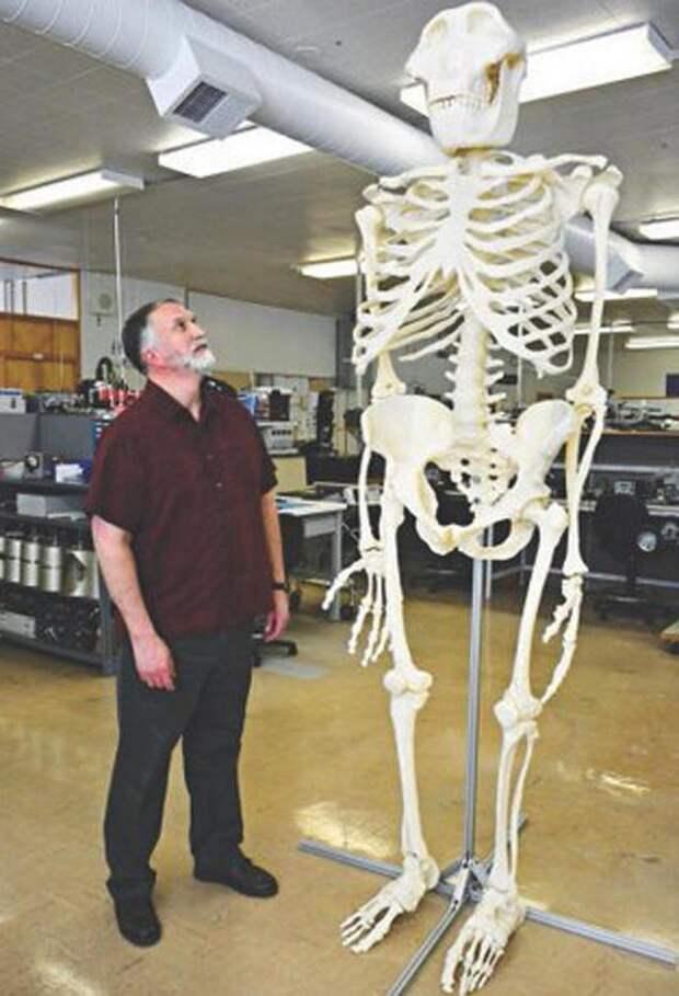 В руках ученых появился скелет снежного человека