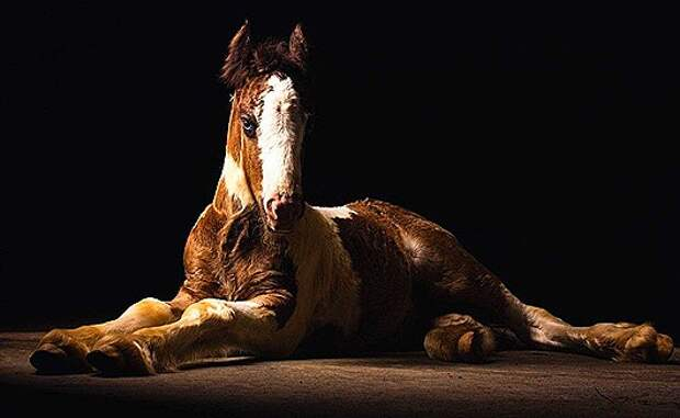 Horse-photography-By-Tim-Flach-01