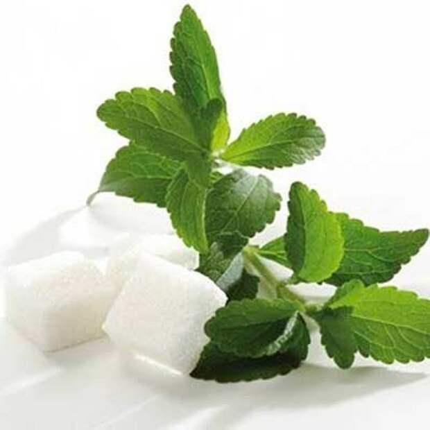 Стевия – идеальный сахарозаменитель или это миф?