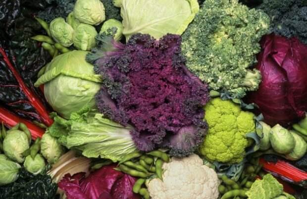 Фото №2 - 7 овощей и фруктов, которые создал человек