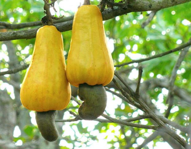 Как растут фрукты и овощи в естественной среде обитания