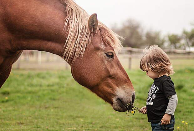Крепкая дружба не нуждается в повседневном общении, не всегда нуждается в единении, пока отношения живут в сердце, настоящие друзья никогда не расстанутся дети, животные, фотография