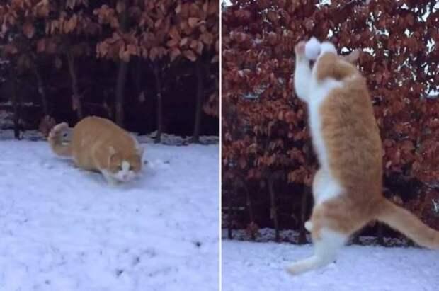Кот Саймона, играющий в снежки