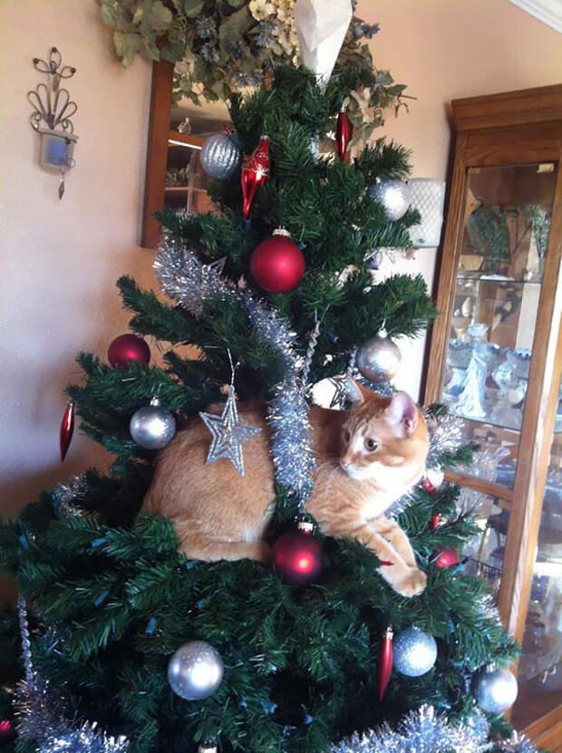 36. Представил себя елочным шариком елка, кошка, подборка