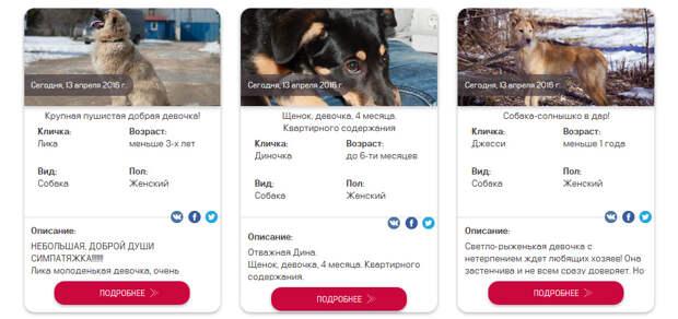 Бездомным животным Москвы найдут хозяев через онлайн-сервис