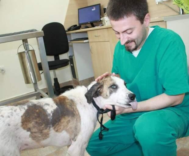 Вторая жизнь полуживой бродячей собаки
