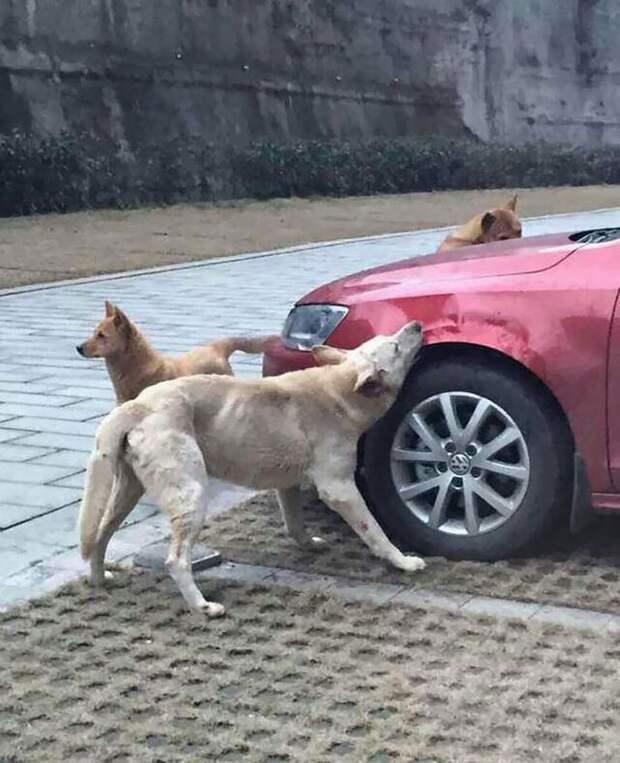 2. Собака и автомобиль карма, люди