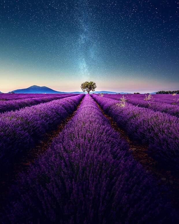 Навевая спокойствие исон: фото лавандовых полей наюге Франции