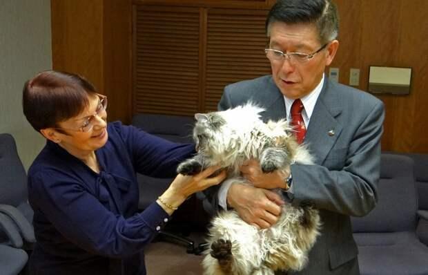 Губернатор префектуры Акита Норихисе Сатакэ с сибирским котом Миром, 2013 год
