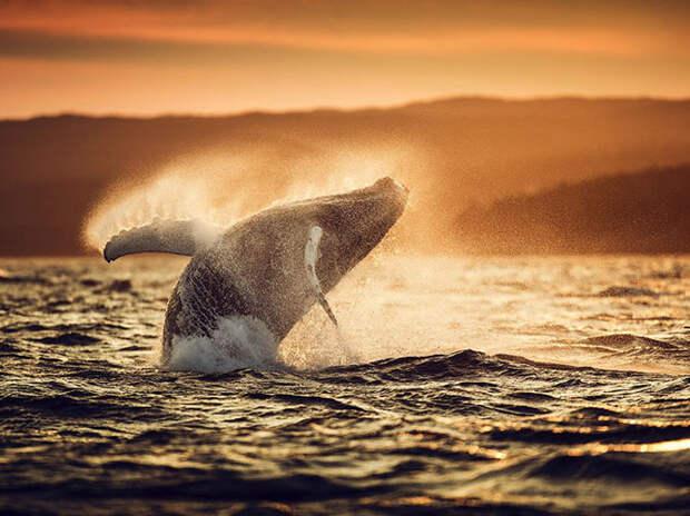 Лучшие фотографии июля 2015 от National Geographic