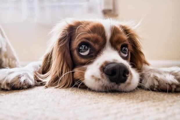 Как приучить щенка к туалету на улице? Даже если у вас плотный график