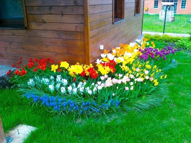 Чудесные цветы для «ленивого» и красивого цветника на даче