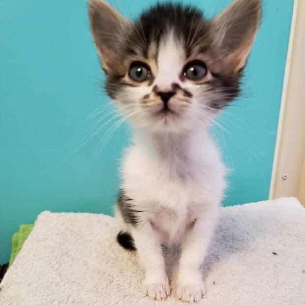 Одинокий котенок стал нянечкой двух новорожденных комочков история, история спасения, коты, котята, кошки, помощь животным, трогательно