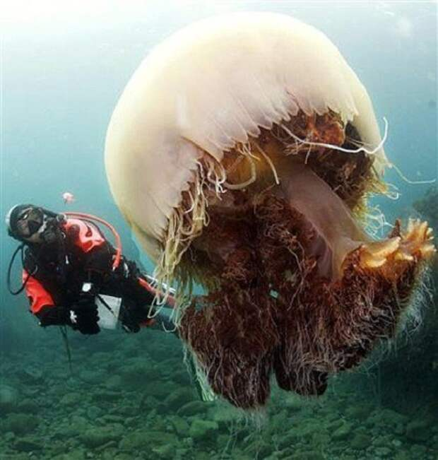 20 гигантских животных, глядя на которых выступает холодный пот на лбу