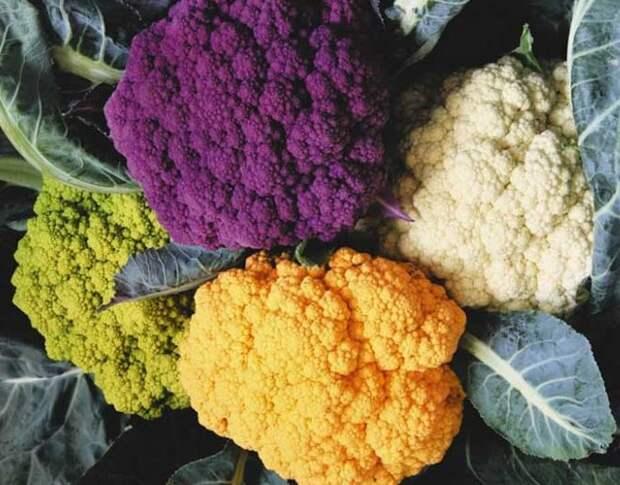 Цветная разноцветная капуста