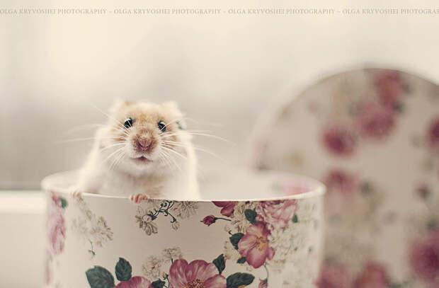 37 фотографий животных, которые вызывают улыбку - 17