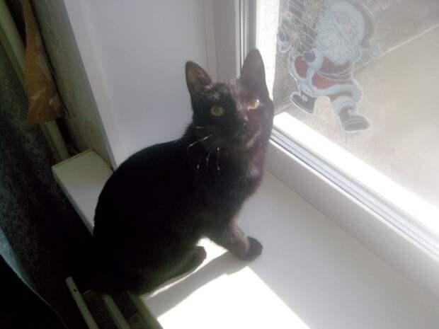 Летом на улице подобрали котенка...